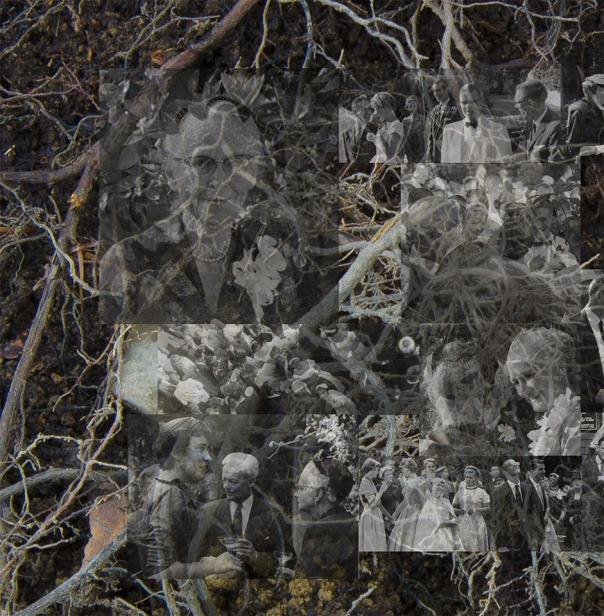 Linn Underhill, Roots, 2015, DETAIL (archival inkjet print)